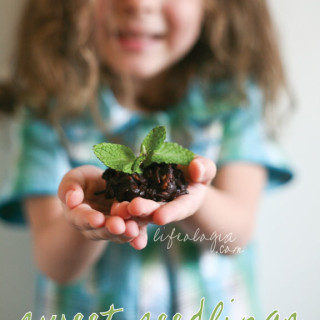 sweet seedlings with chocolate dirt : an earth day dessert