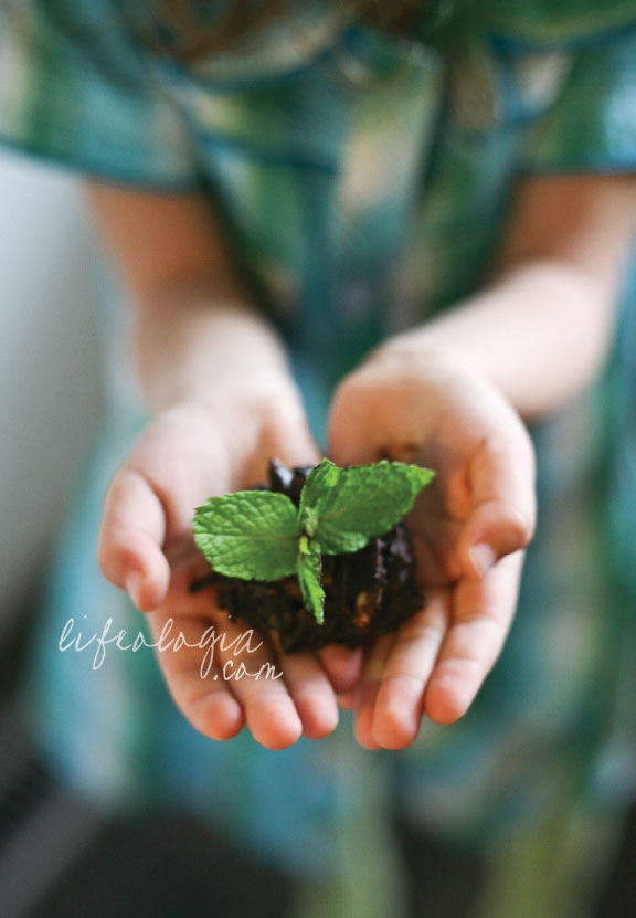 lifeologia-sweet-seedlings-from-the-earth-an-earth-day-vegan-treat7