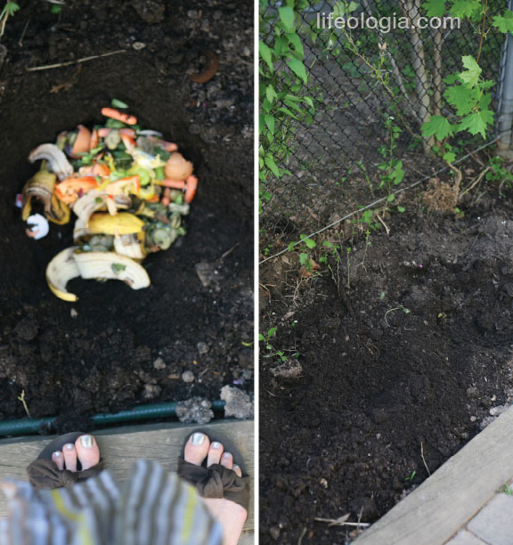 lifeologia-how-to-ditch-your-compost2