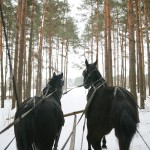 Pure-Ella-Horse-Drawn-Sleigh-Ride3
