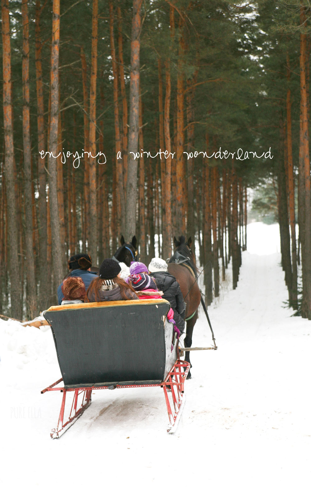 Pure-Ella-Horse-Drawn-Sleigh-Ride9