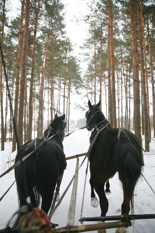 Pure-Ella-Horse-Drawn-Sleigh-Ride3