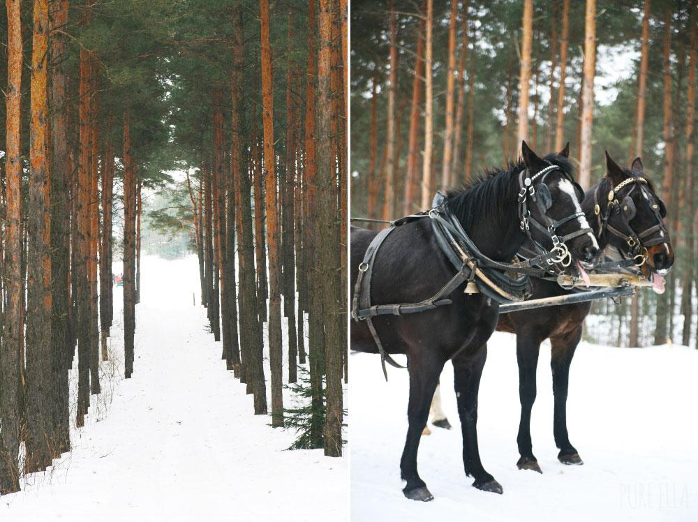 Pure-Ella-Horse-Drawn-Sleigh-Ride7