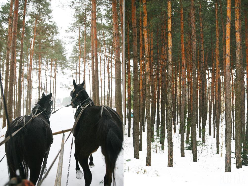 Pure-Ella-Horse-Drawn-Sleigh-Ride8